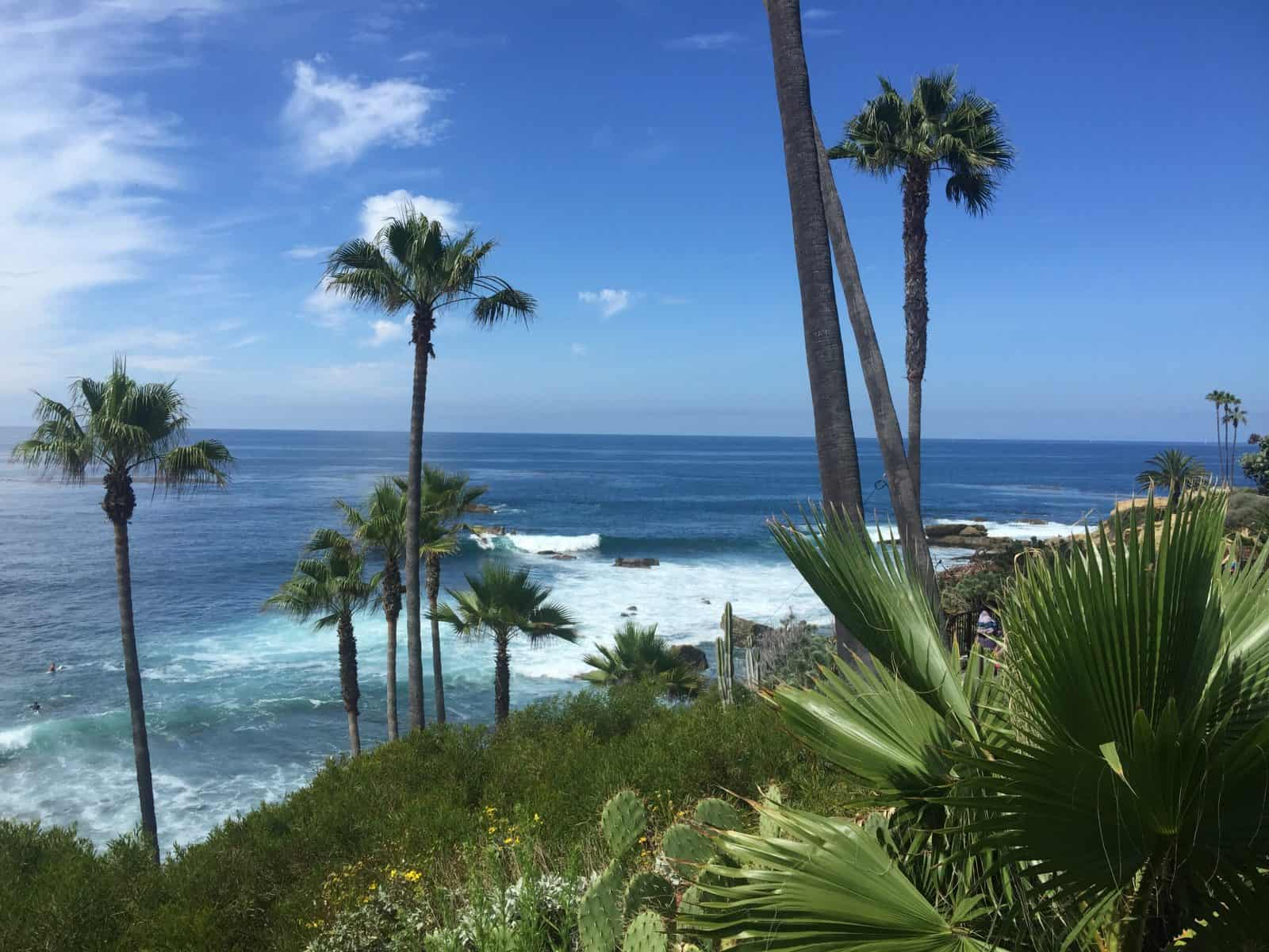 Laguna Beach Palm Trees
